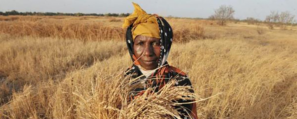 Indigenous Knowledge Fighting Drought in South Africa