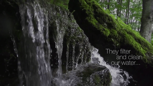 "WATCH: World Rainforest Movement Asks, ""Where Is The Water?"""