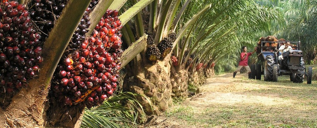 Small Oil Palm Plantations Having Big Impacts on Peru Rainforest