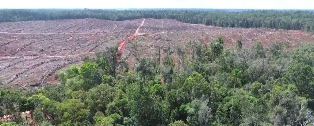 WATCH: Drone Footage Shows Massive Deforestation by Indonesia's Biggest Palm Oil Company