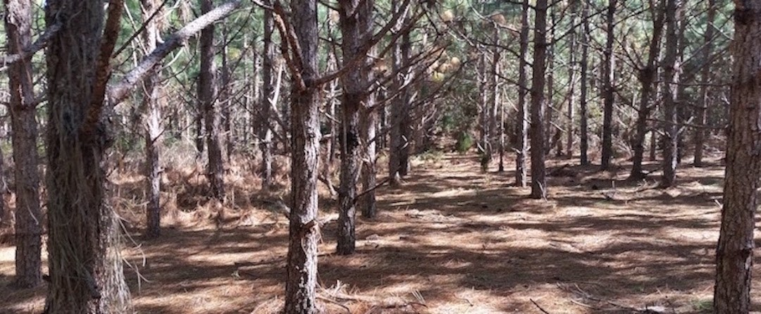 National Meeting Makes Plans to Stop Genetically Engineered Trees