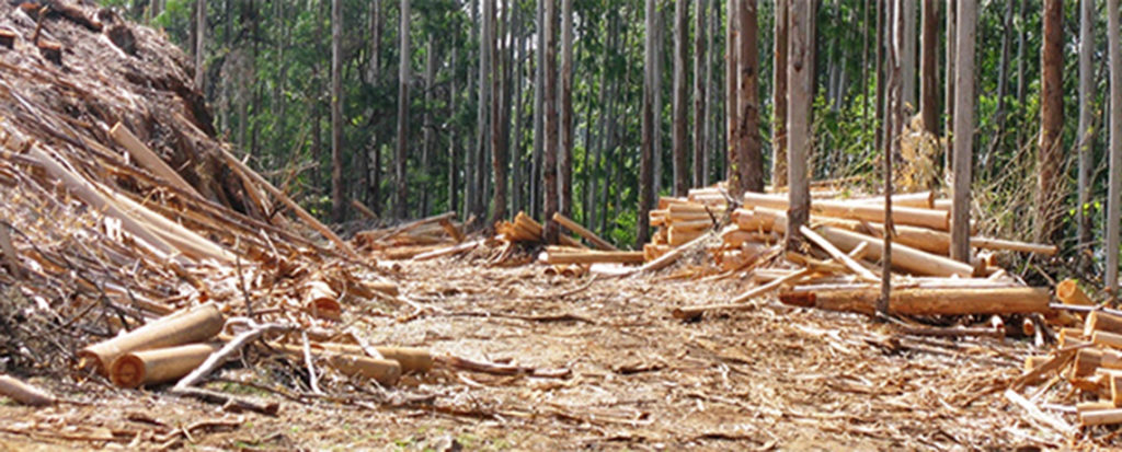 GE Trees and Global Warming: The Myth of Carbon Offset Forestry