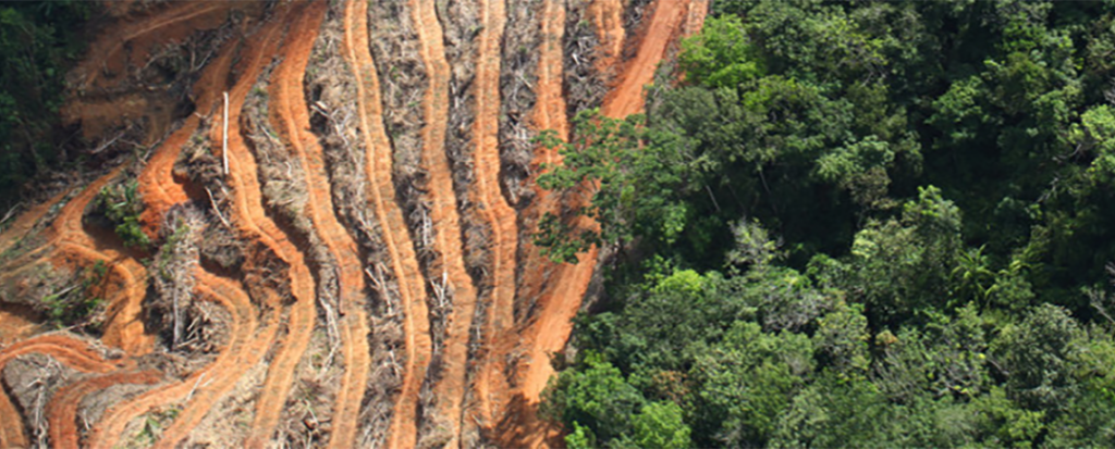 Companies Underestimating Risks of Deforestation in Commodities Supply Chains