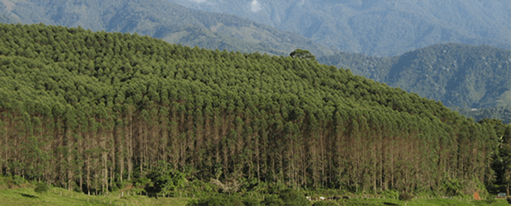 Paris Agreement on Climate Change:  Promoting Tree Plantations,  Reducing Forests to Tradable Carbon Stores