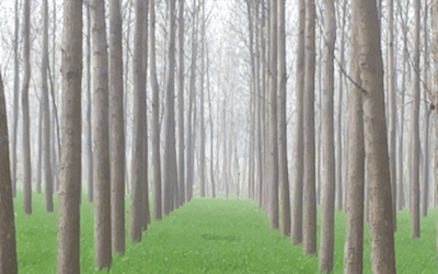 Claims of Successful Genetically Engineered Tree Sterility Overblown