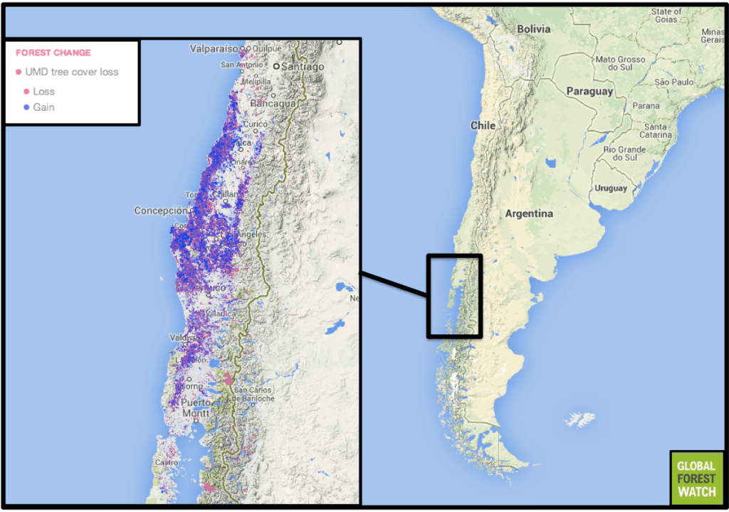 When Forests Aren't Really Forests: The High Cost of Chile's Tree Plantations