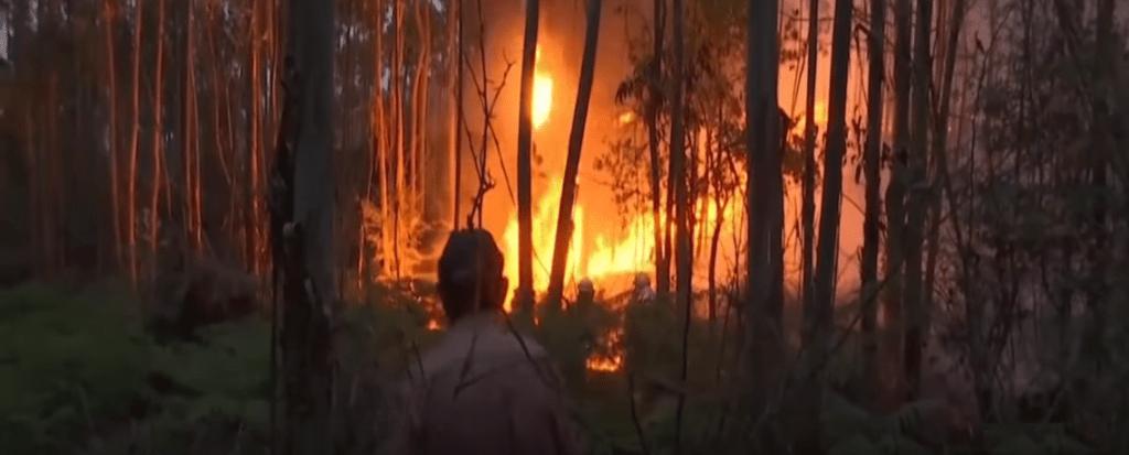 Washington Post: Environmentalists Urge USDA to Reject Genetically Engineered Eucalyptus Trees