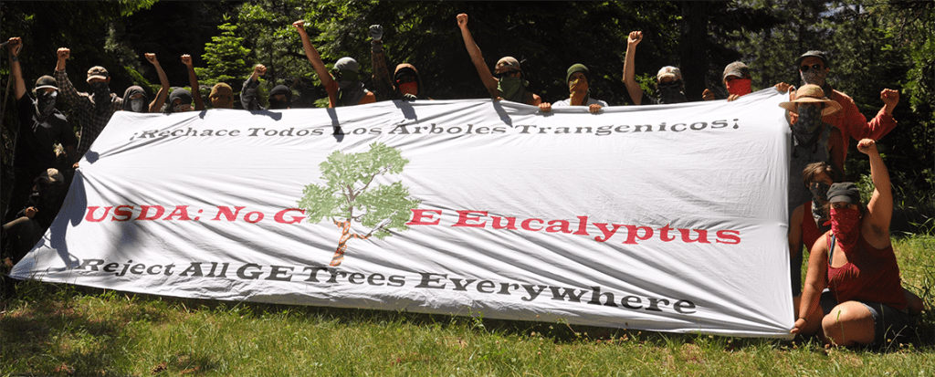 Fight Against GE Eucalyptus in US Gets Major Media Coverage
