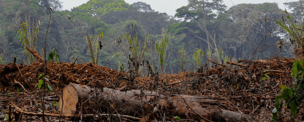 New data reveals shocking scale of planned forest biomass industry growth
