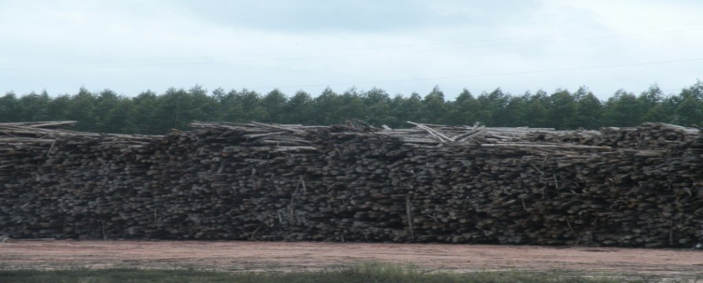 Study: Biomass Energy Has Big Climate Impact Even Under Best Case Scenario
