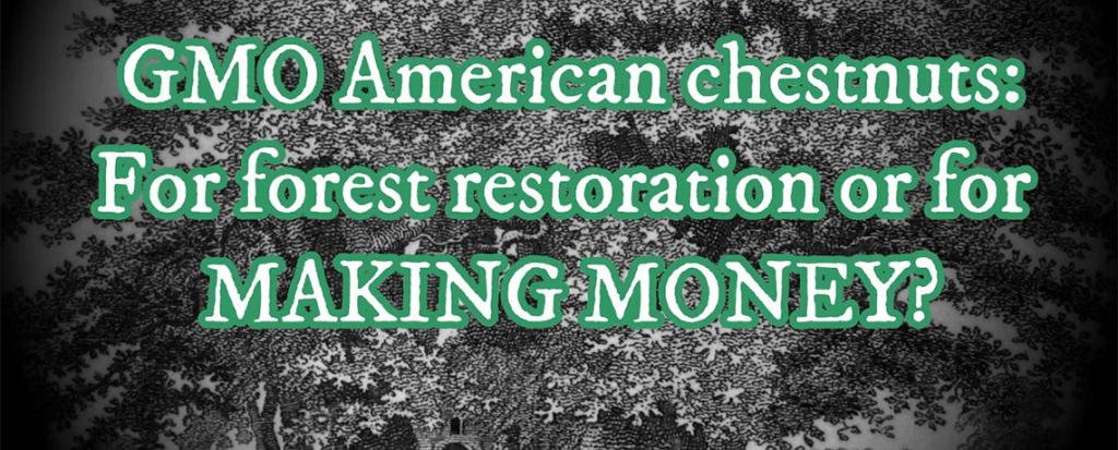 WATCH: GMO American Chestnuts – For Forest Restoration or for Making Money?