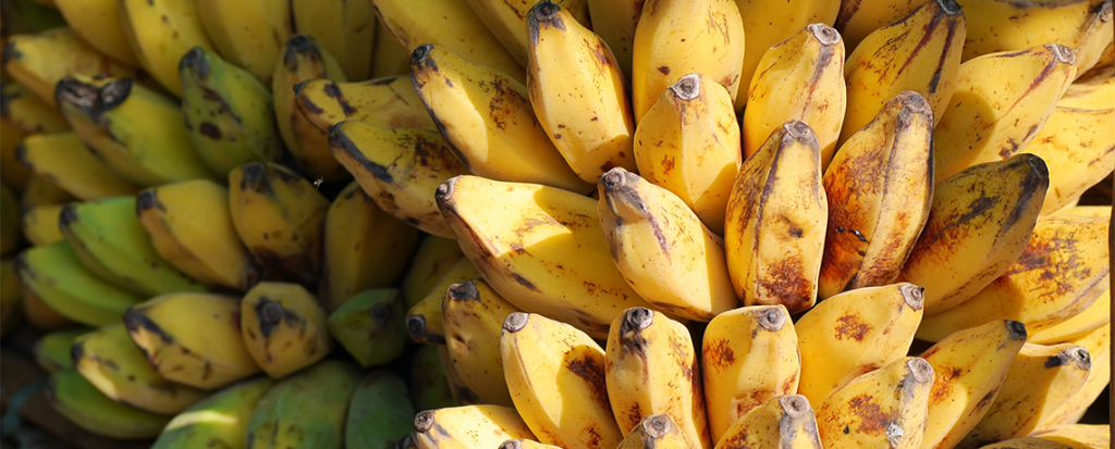 GMO Bananas Not The Answer: Uganda's Biodiversity is Solution to Country's Food Problems