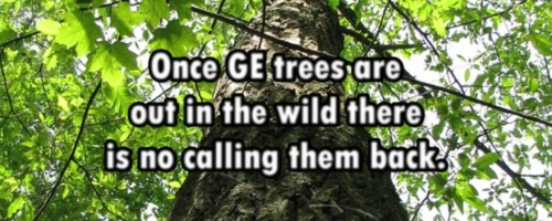 Genetically Engineered Trees: Not Worth The Risk