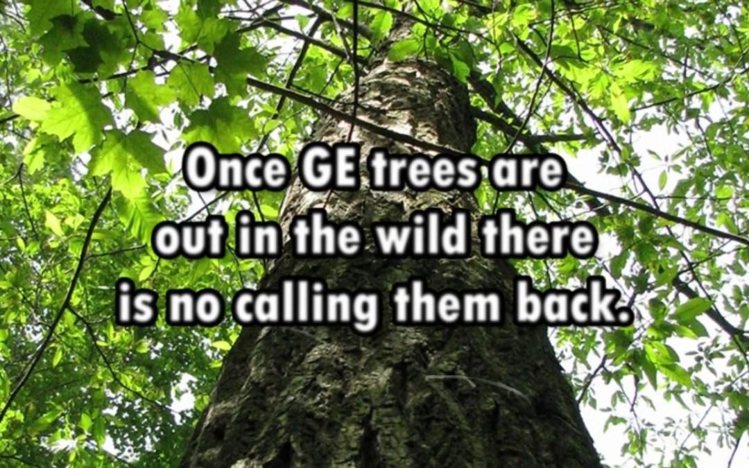 NAS Warns US Regulations Unprepared for GE Trees