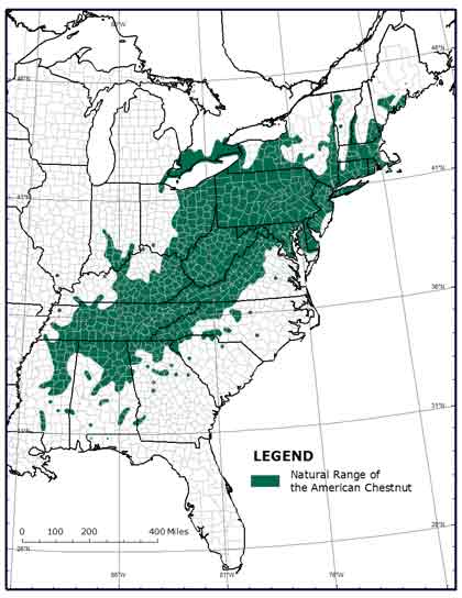 Genetically Engineered American Chestnut White Paper Executive Summary