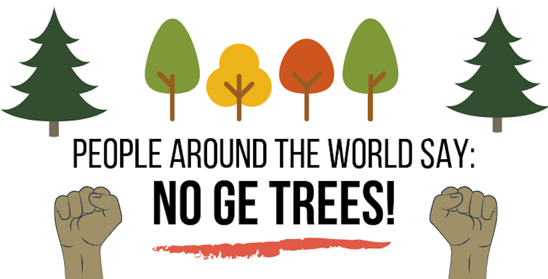 NY Times Magazine Promotes GE Trees – We Set the Record Straight