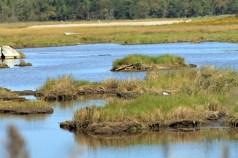 The Marsh 3-Wells Estuarine Research Reserve