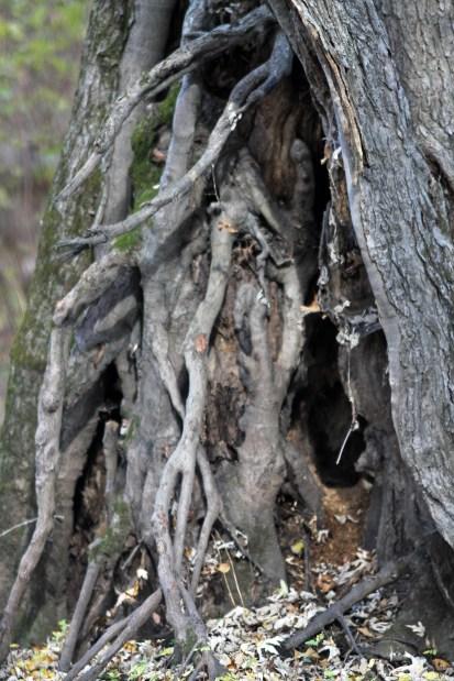 Twisted Tree 2