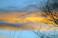 Early Evening Sky 1