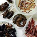 School lunches to include 'authentic' Mexican fare such as insects