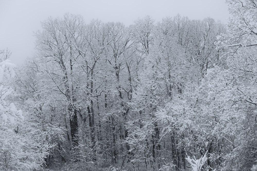 December 2017 Snow