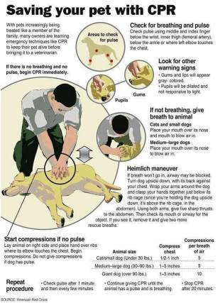 Cats and dogs - Medical CPR saving your pet with