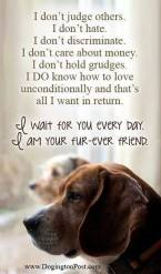 Dogs - Friend true