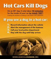 Dogs - Medical hot car safety 06
