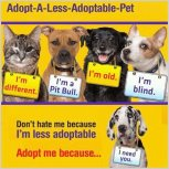 Homeless pets - Adopt special needs