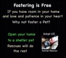 Homeless pets - Help fostering is free
