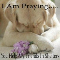 Homeless pets - Help prayer for shelter dogs