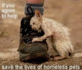 Homeless pets - Help save the lives of homeless pets