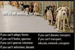 Homeless pets - Help shelter dogs any way you can