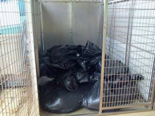 Homeless pets - Kill black bags in cage