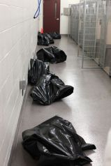 Homeless pets - Kill black bags in corridor
