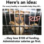 Homeless pets - Kill shelters funding lose