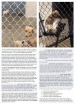 Homeless pets - Kill shelters hosing