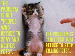 Homeless pets - Kill shelters refuse to stop