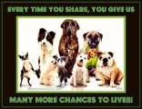Homeless pets - Share give chance to live