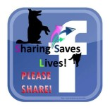 Homeless pets - Sharing saves lives