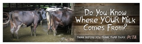 Factory farming - dairy do you know where it comes from
