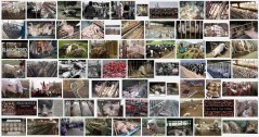 Factory farming - pigs search result 05