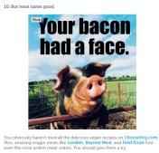 Factory farming - pigs your bacon had a face