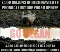 Vegan - truth stats water 3000 children die each day