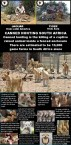 Lions - Poster for canned hunting 15