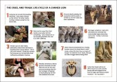 Lions - Posters stages of canned hunting 01