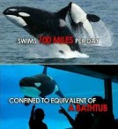 38 Oceans and rivers - Killer whales and Seaworld 01