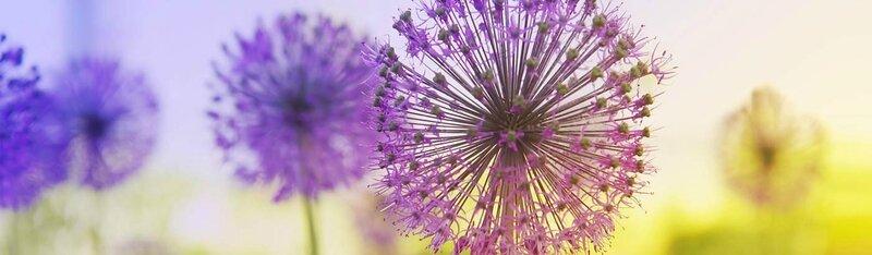 naturo fleur bande