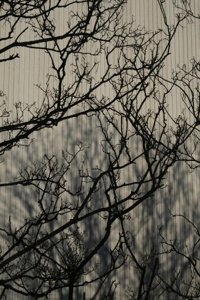 Image 26