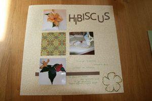 120422_hibiscus